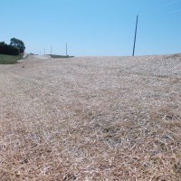 Erosion-Control-Miller-Seed-unspecified-6