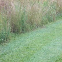 Grasses-Miller-Seed-unspecified-19