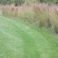 Grasses-Miller-Seed-unspecified-22