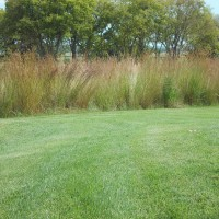 Grasses-Miller-Seed-unspecified-30